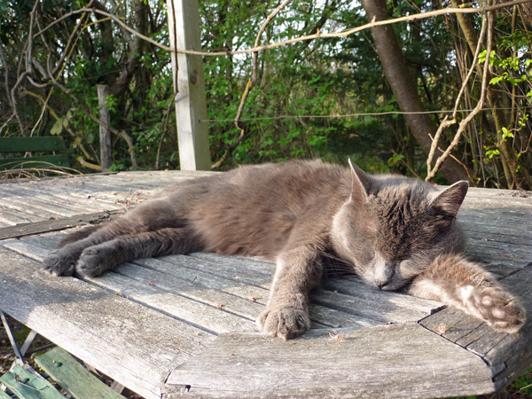 pacal-cat
